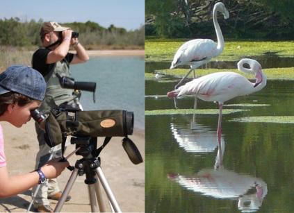Ruta de avistamiento de aves en La Albufera